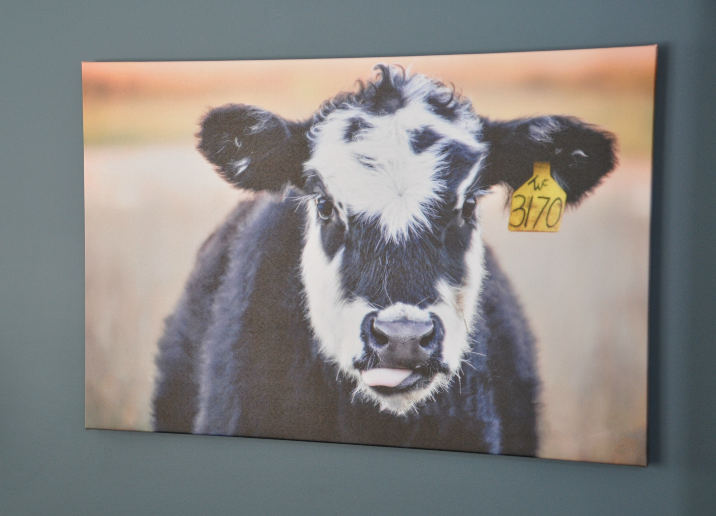 Cow Art   Decor and the Dog