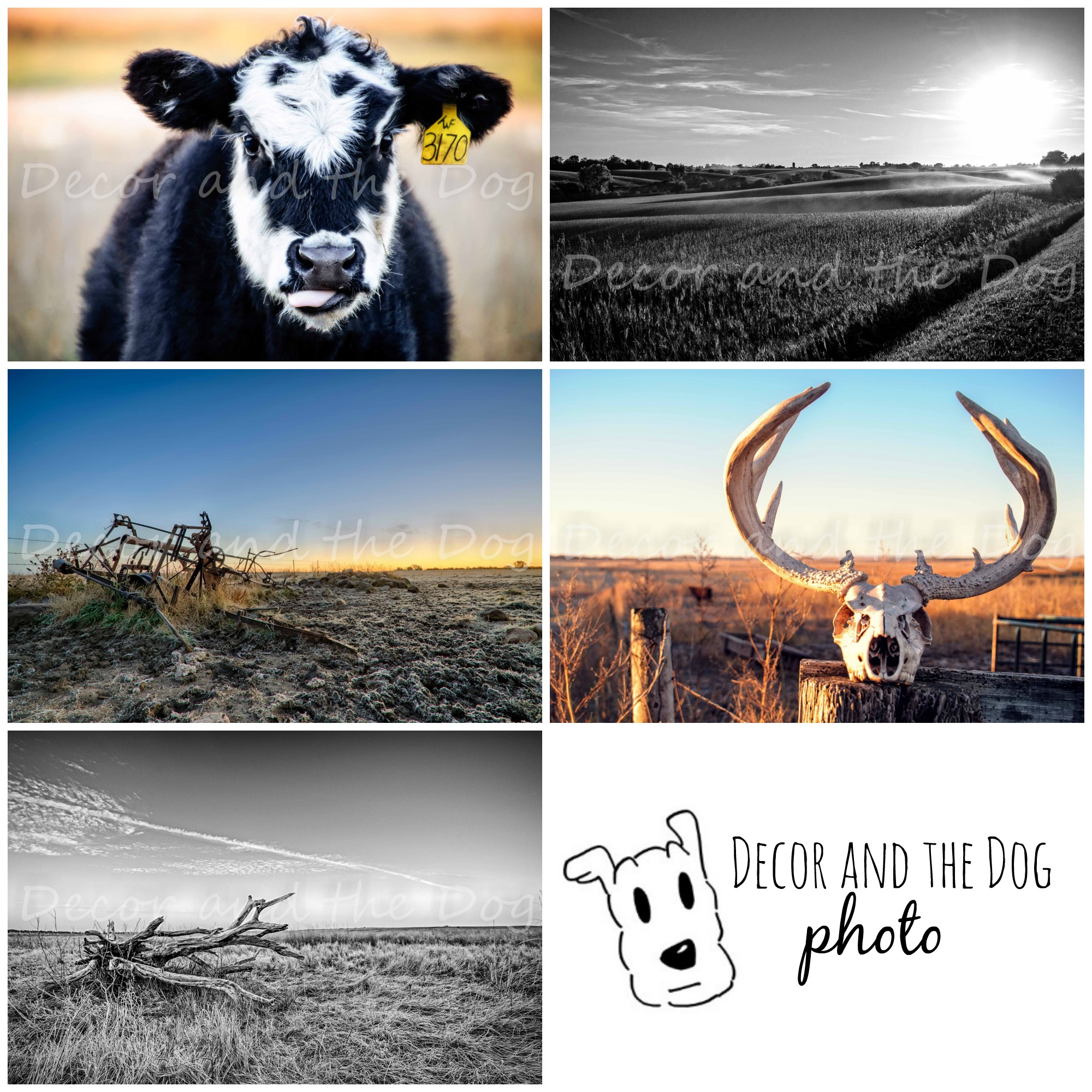 Decor and the Dog Photo 2014