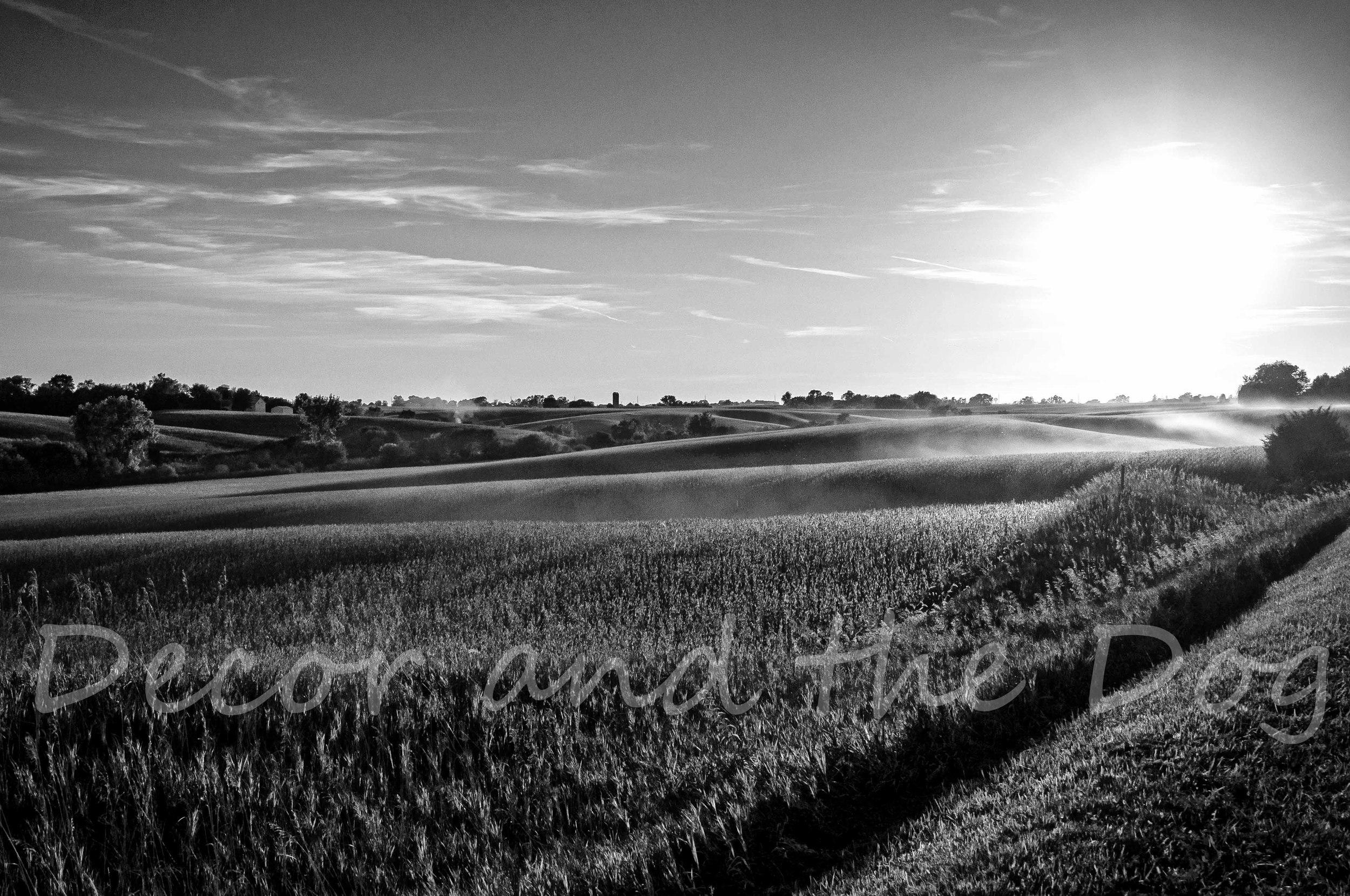 Sample Iowa Cornfields