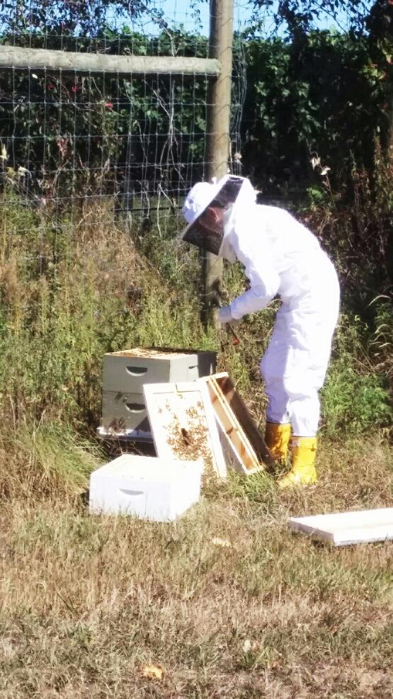 lisa_beekeeper2.jpg