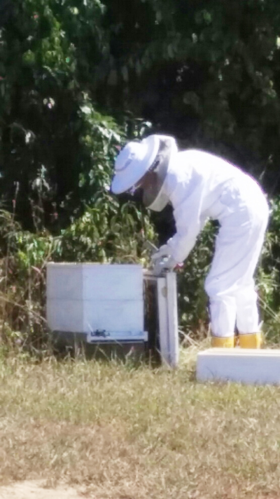 lisa_beekeeper4.jpg
