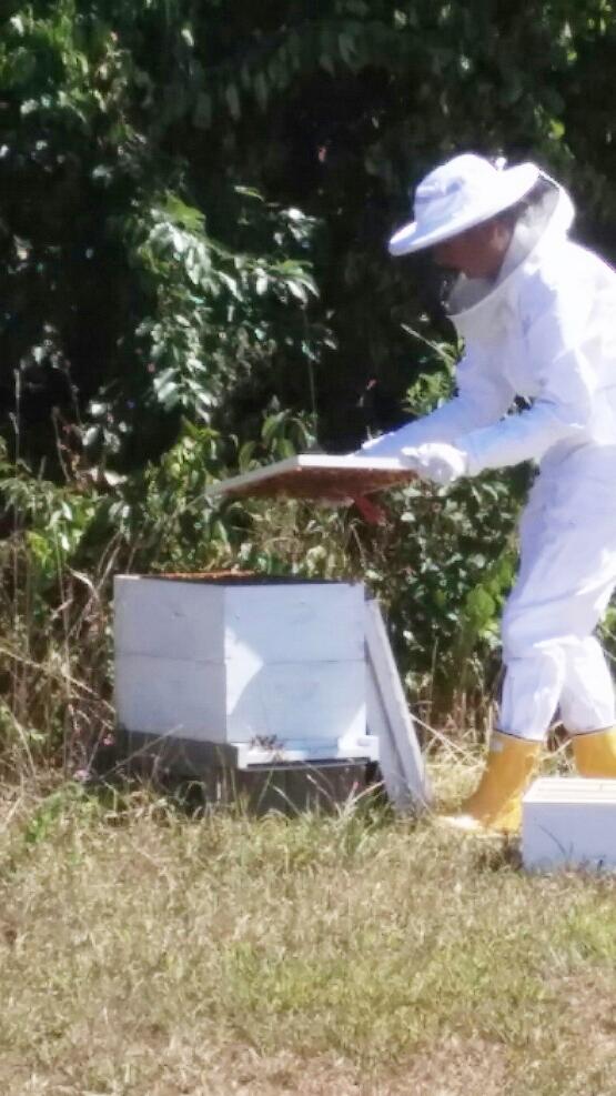 lisa_beekeeper5.jpg