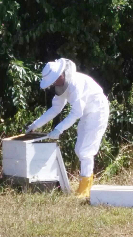 lisa_beekeeper6.jpg