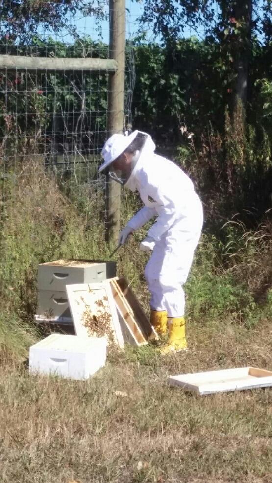 lisa_beekeeper8.jpg