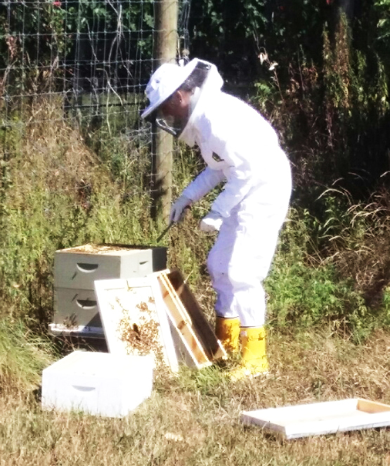 lisa_beekeeper9.jpg