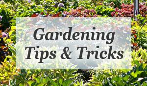 gardening-300x175.jpg