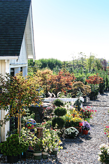 Our colorful October morning at the Garden Center.