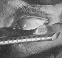 The shot of the eyeball (actually that of a dead calf) being slit by Buñuel