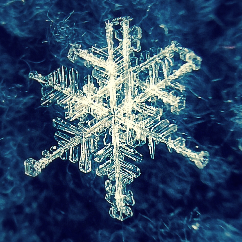 blizzard run-away