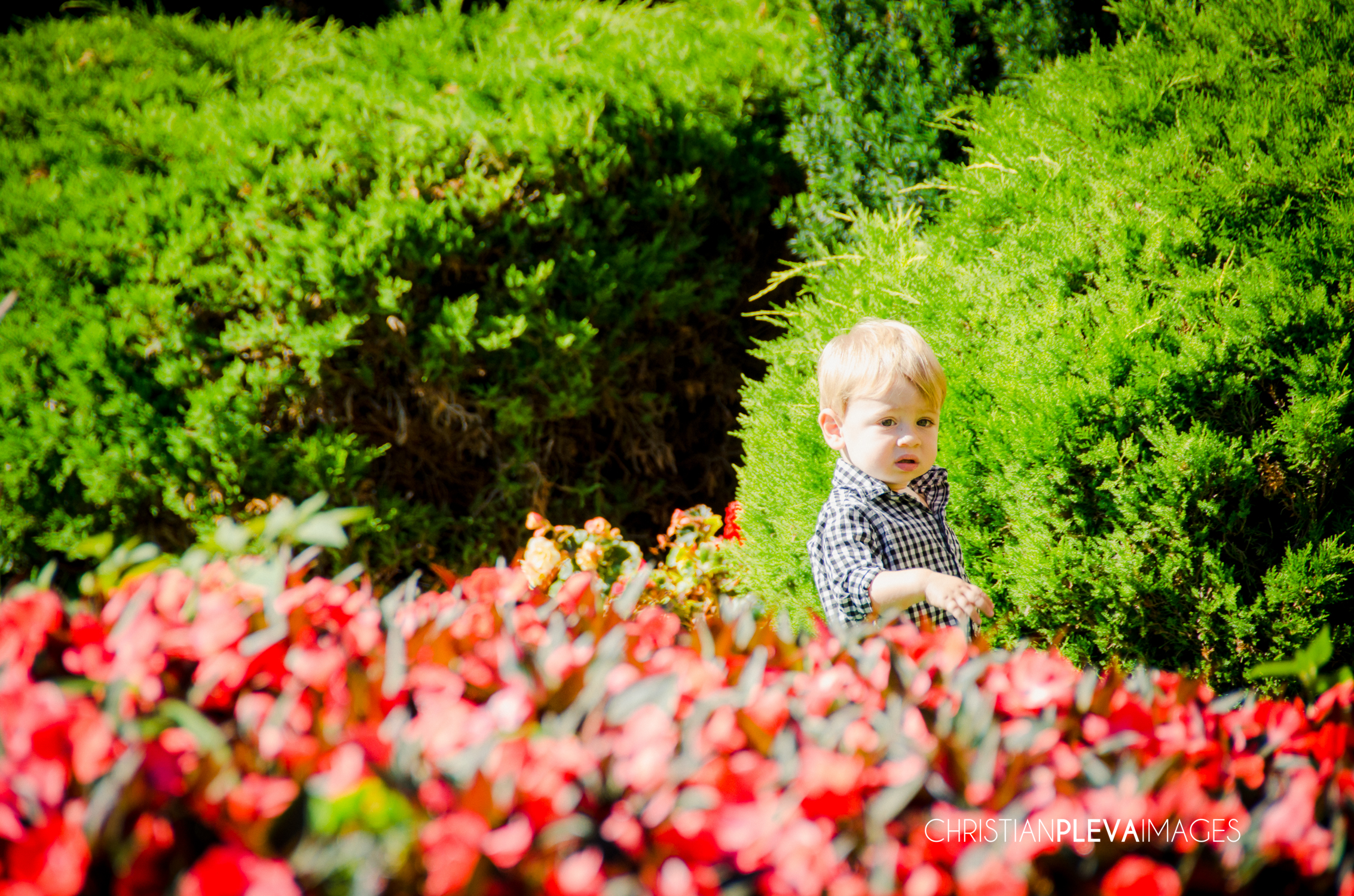 boston family photographer-max-5.jpg