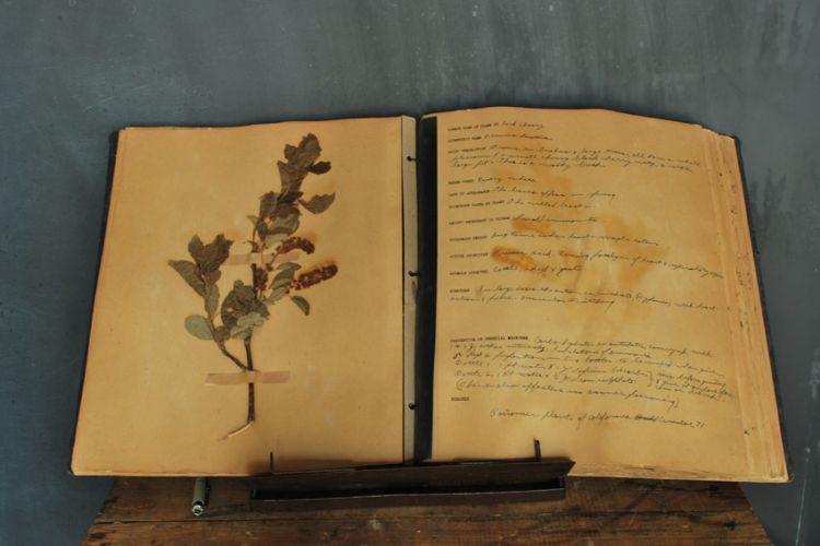 plantbook4.jpg