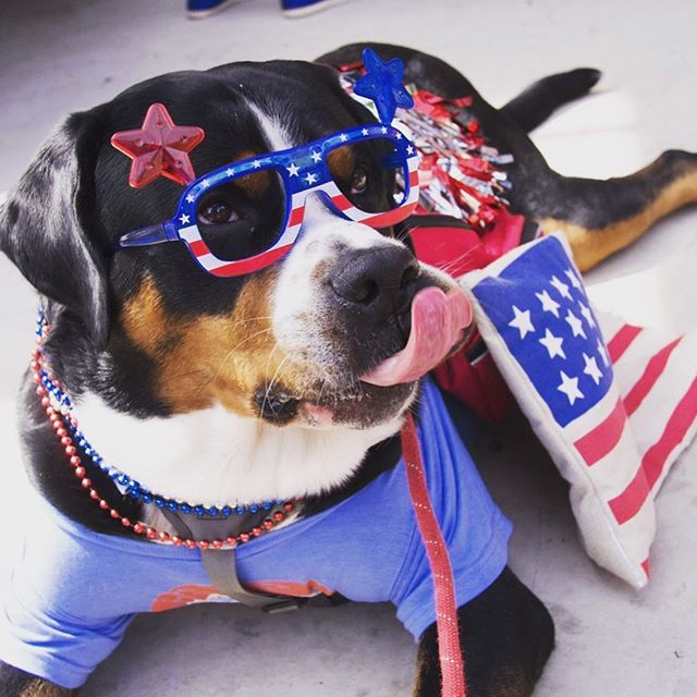 Happy 4th of July! 💥 🇺🇸 💥 #dogsofchicagospineandsports #4thofjuly