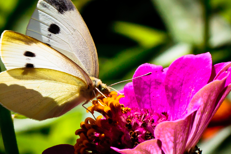Butterfly IV, Martha's Vineyard, MA