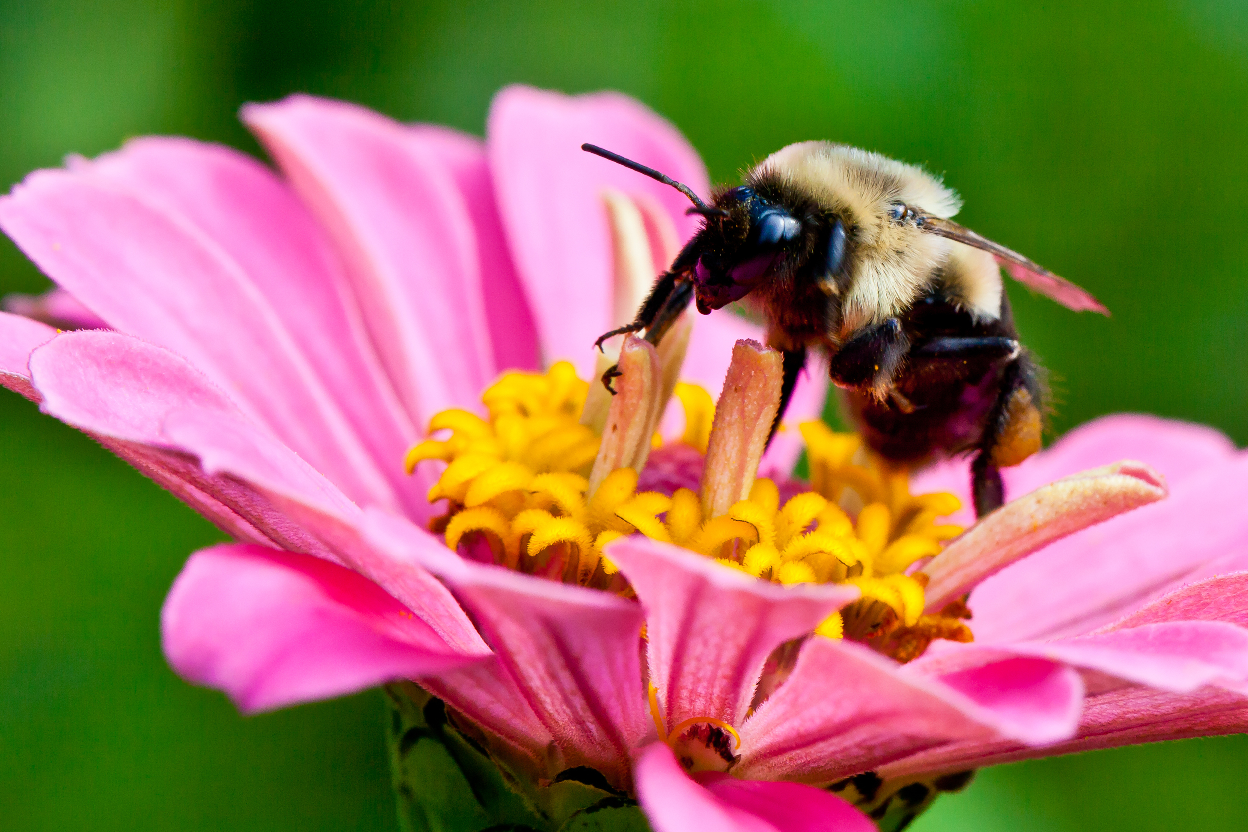 Honey Bee II, Martha's Vineyard, MA