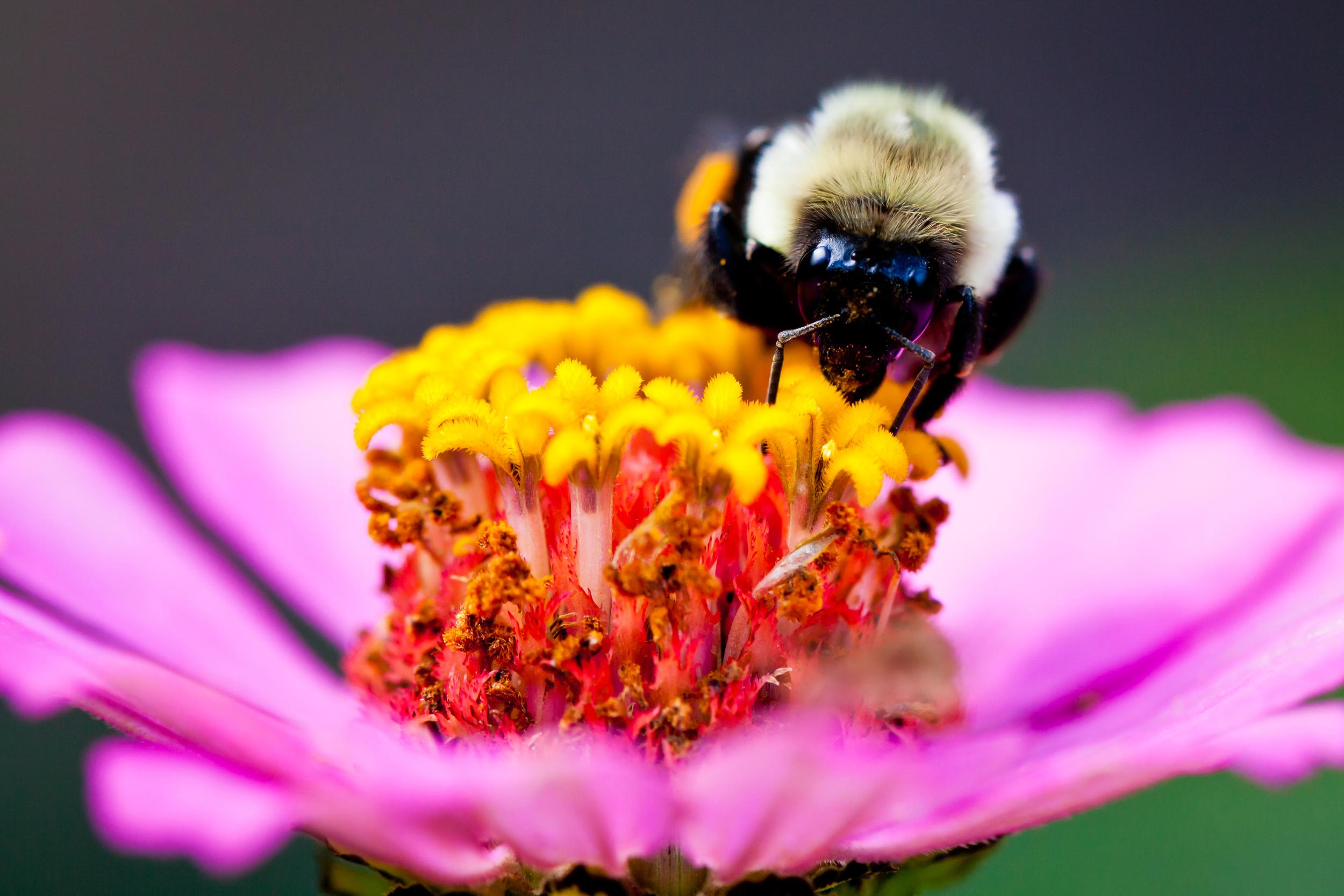 Honey Bee III, Martha's Vineyard, MA