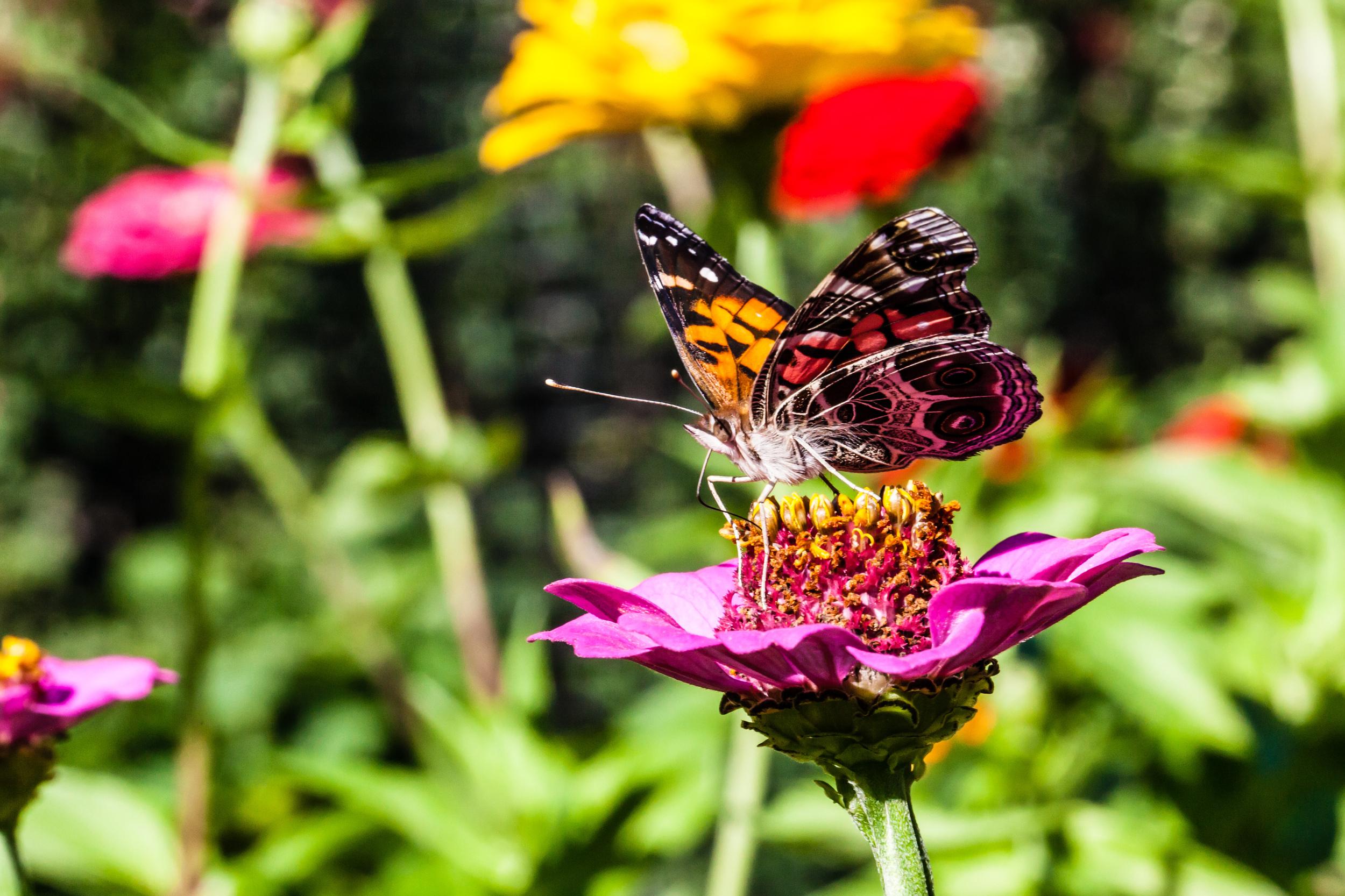 Butterfly III, Martha's Vineyard, MA