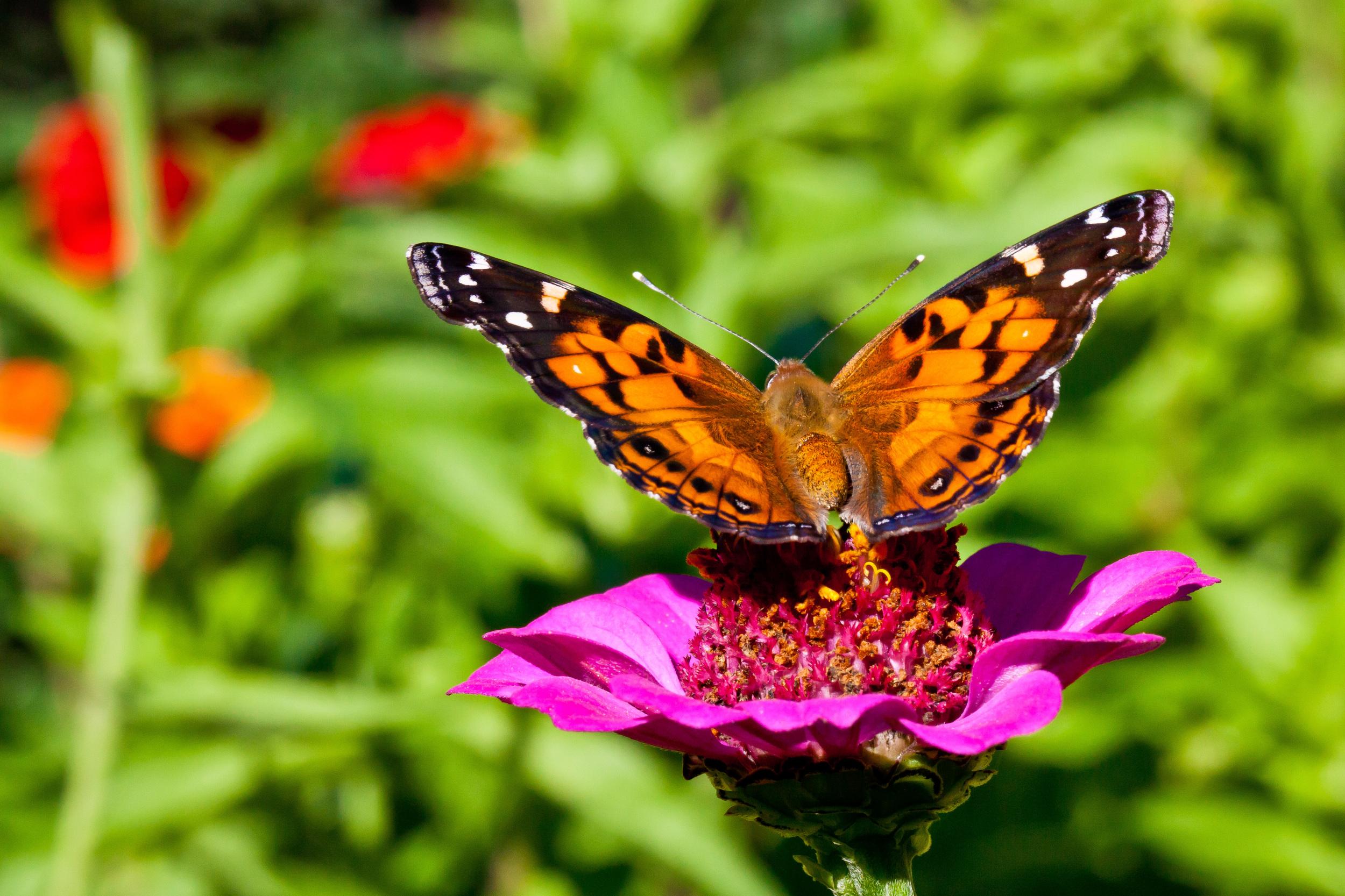 Butterfly I, Martha's Vineyard, MA