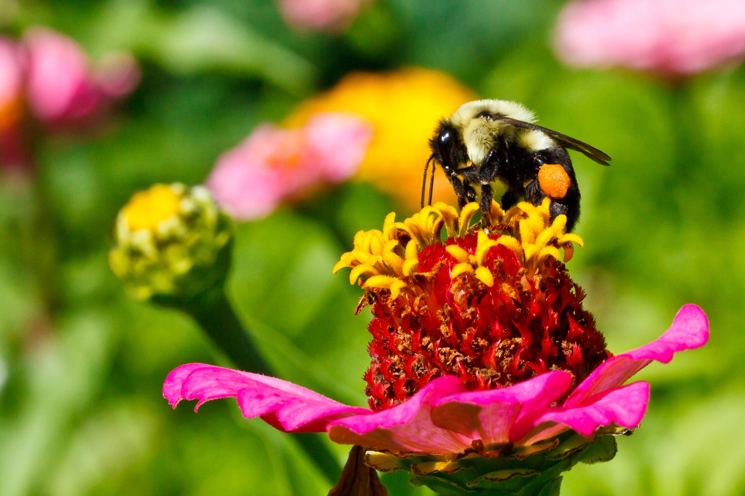 Honey Bee I, Martha's Vineyard, MA