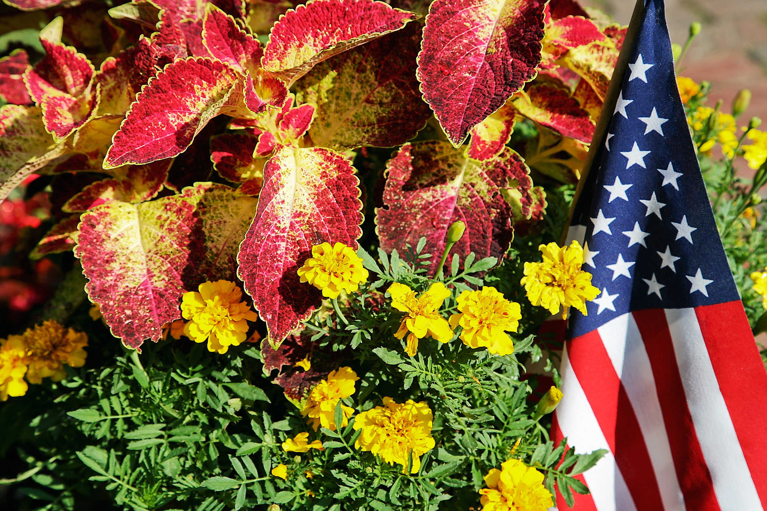 Flowers and Flag, Edgartown Square, MA