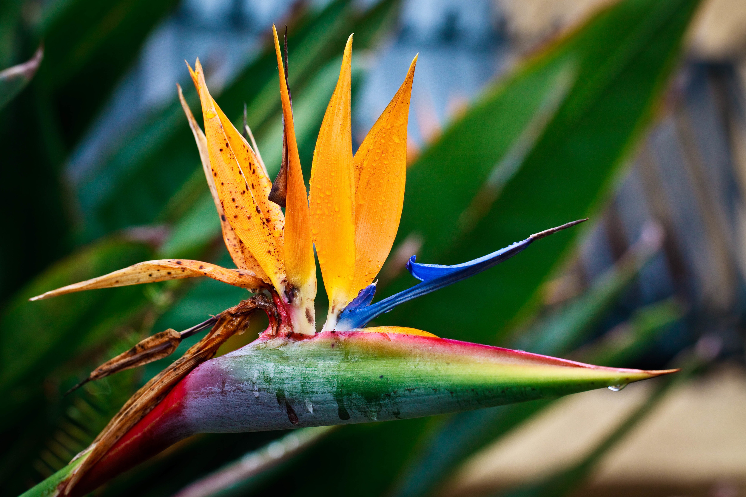 Flora or Fauna?, North Hollywood, California