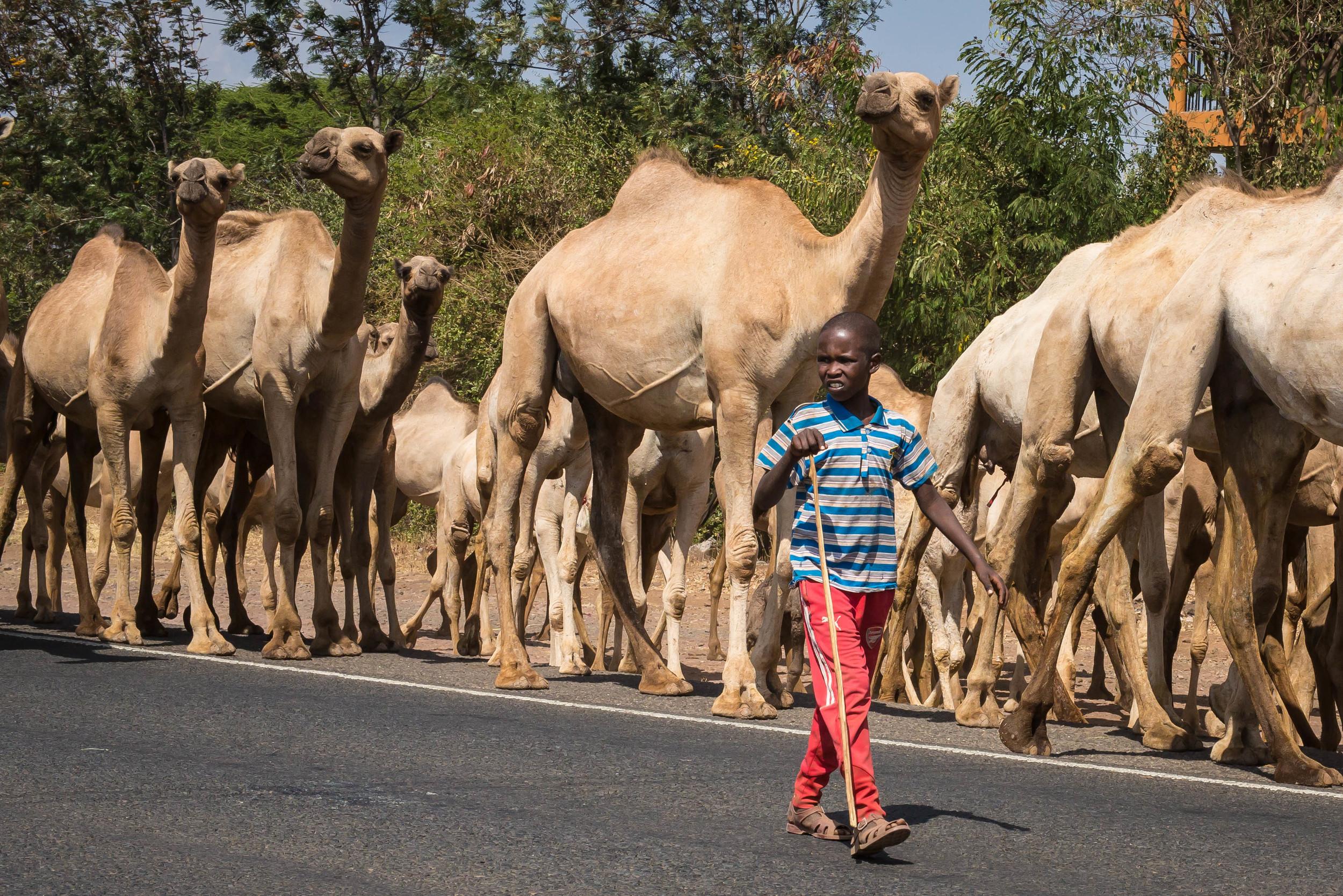 Marching to Mombasa, North of Meru County, Kenya