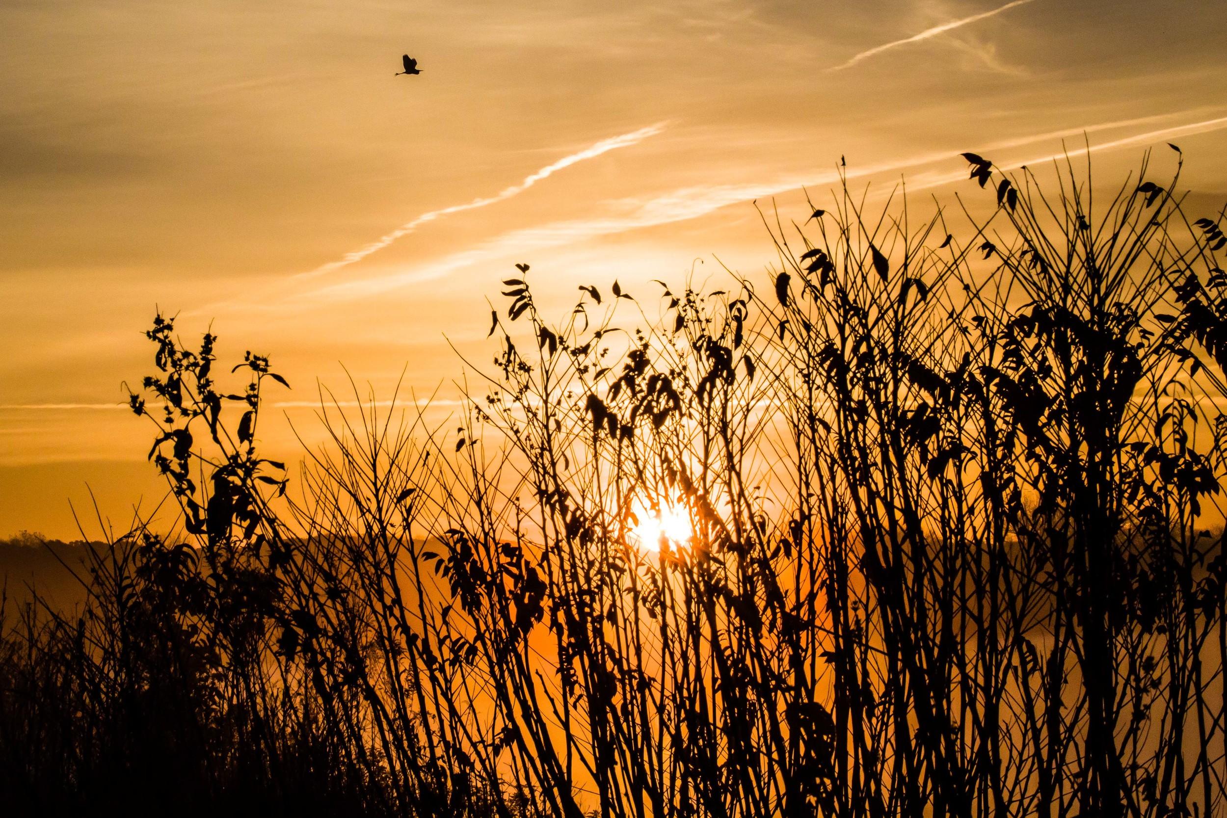 Iowa Sunrise, Ada Hayden Park, Ames, Iowa