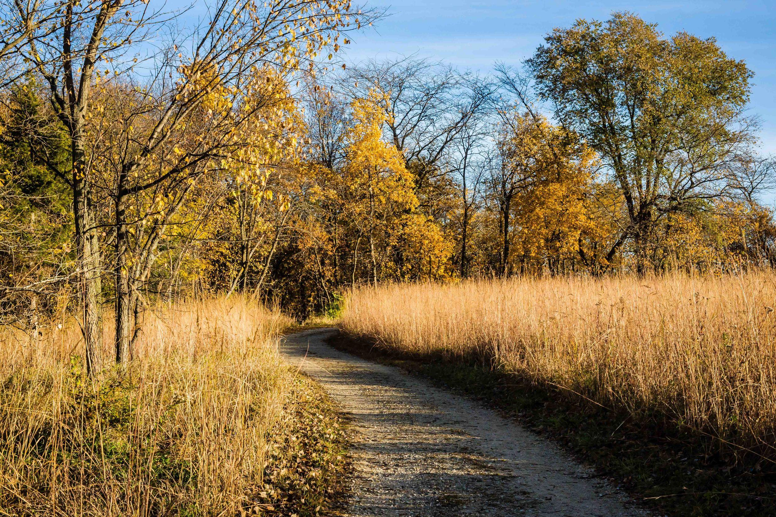 Tall Grass Prairie, McFarland Park, Story County, Iowa