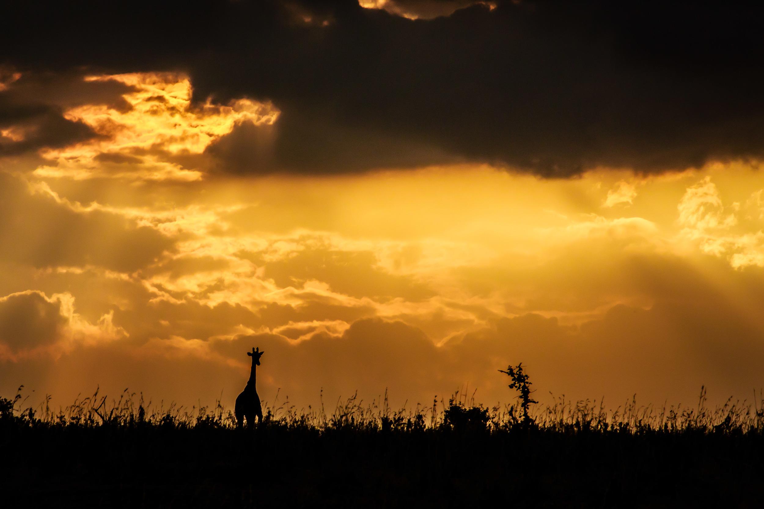 Evening Silhouette on the Masai Mara