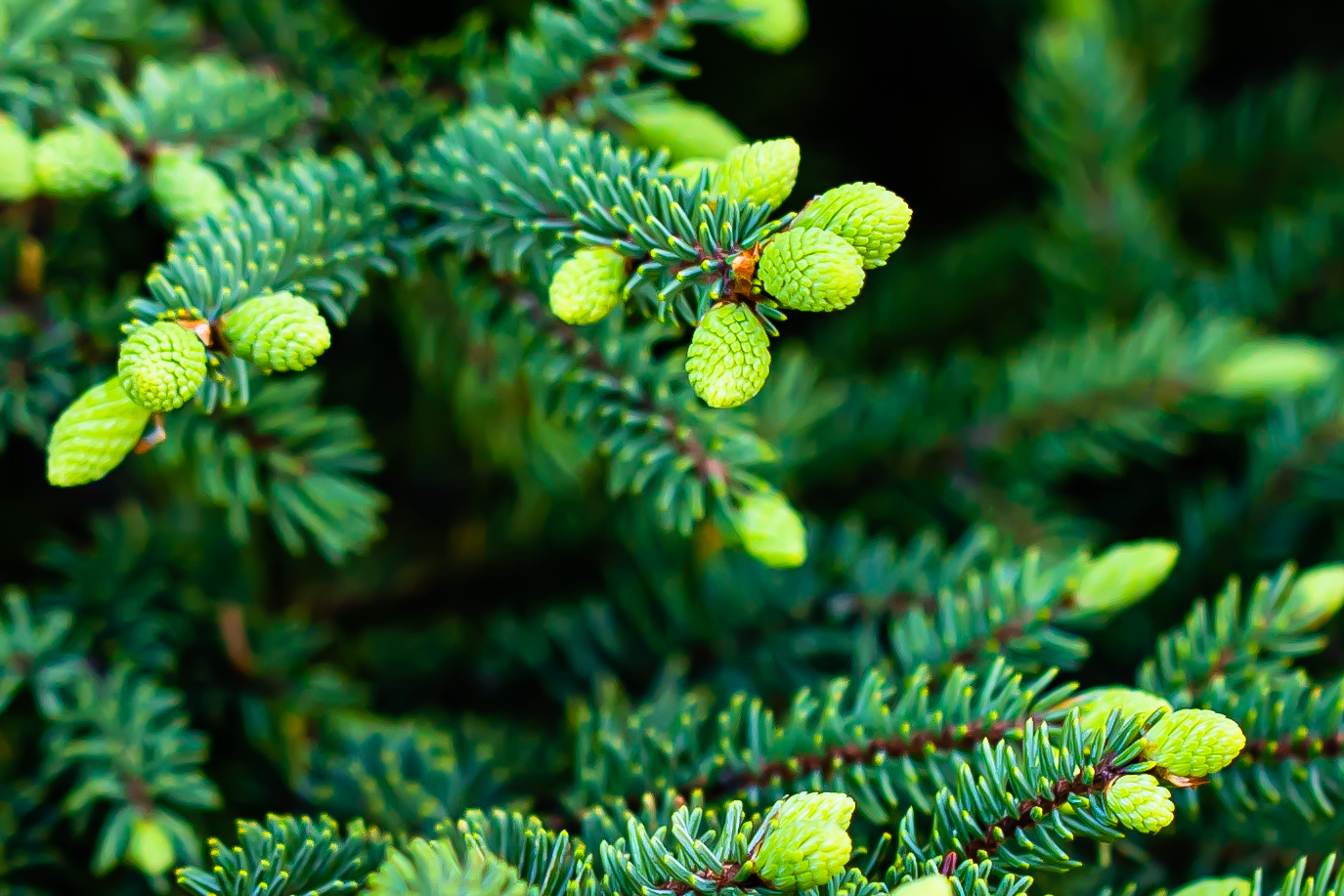 Minnesota North Shore Forest: Christmas in July