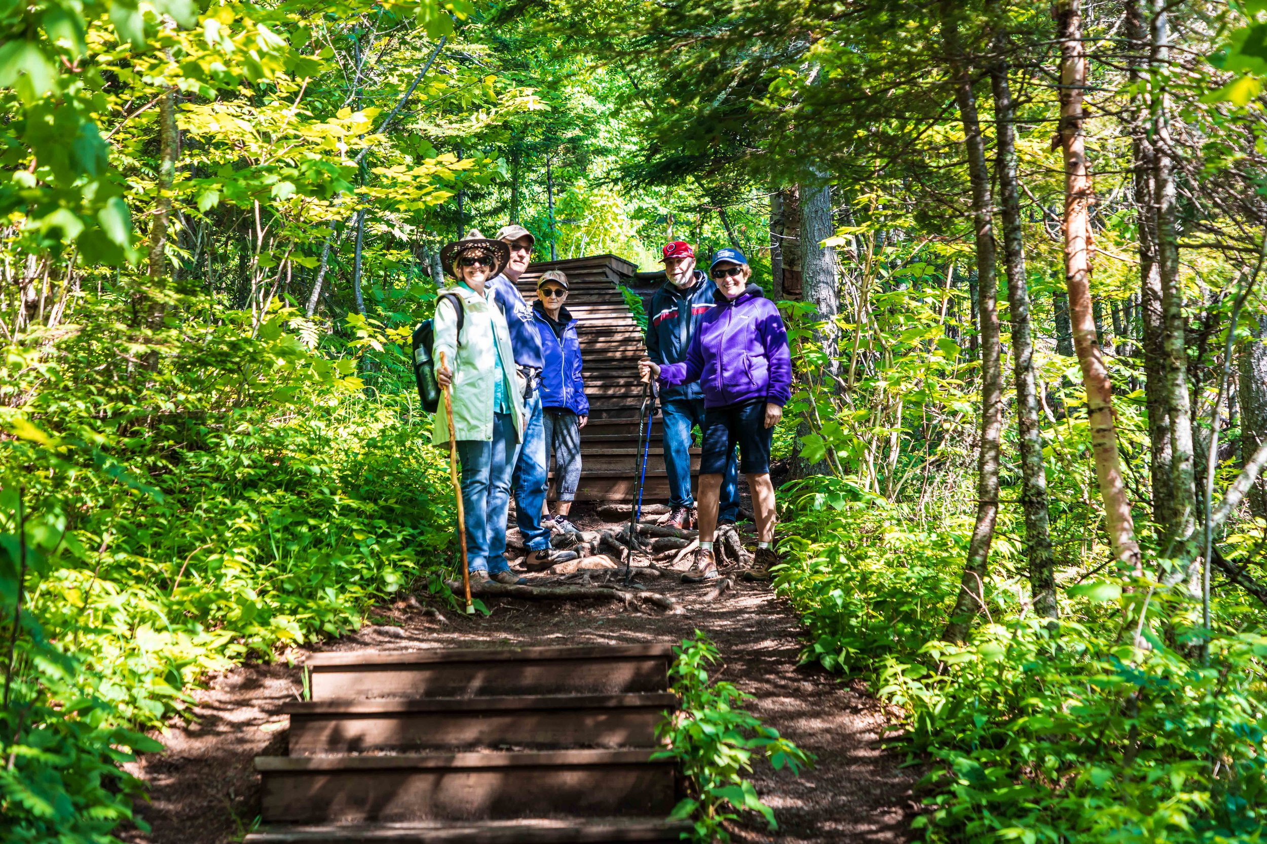 Minnesota North Shore Forest: Up or Down?