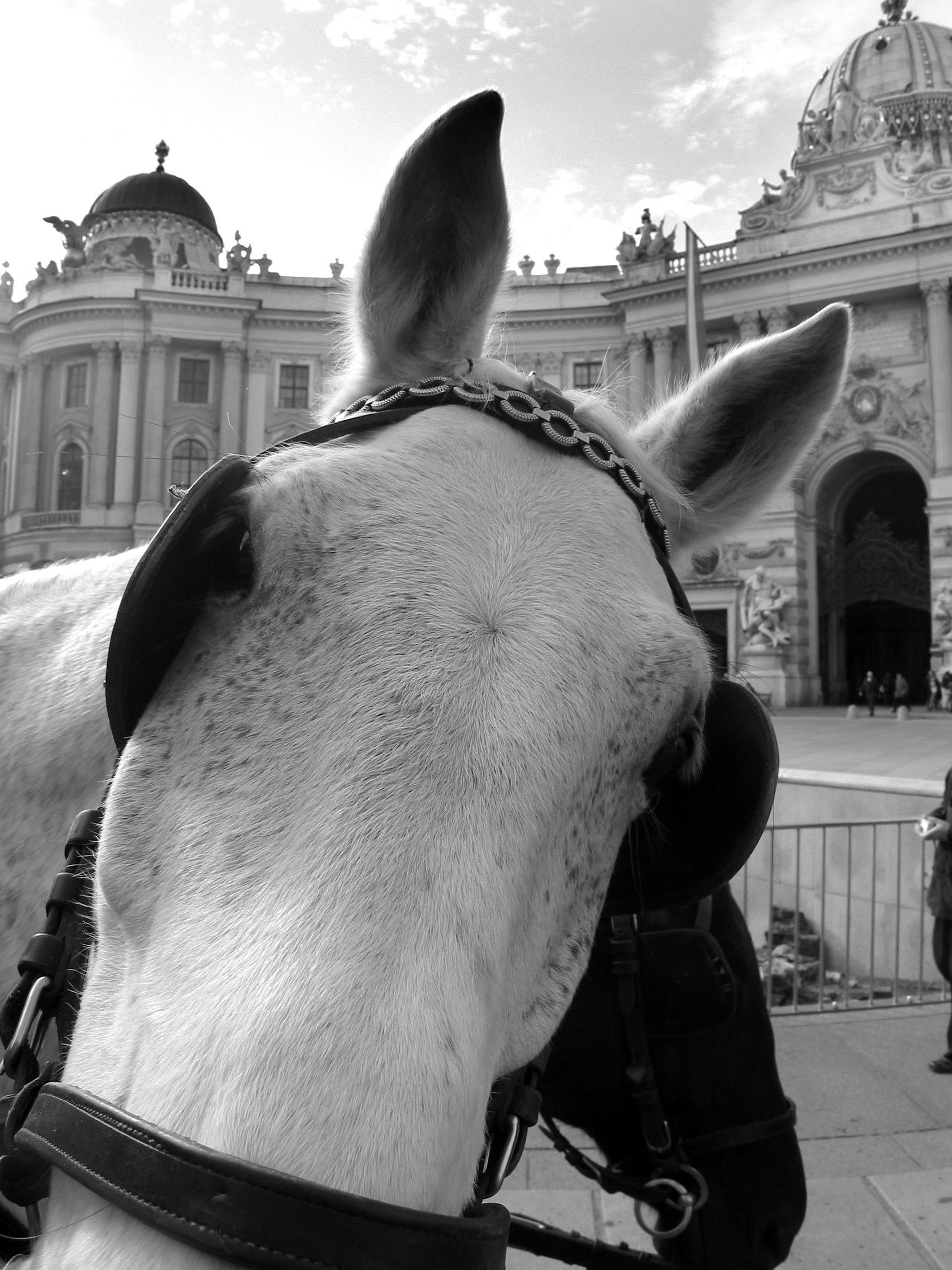 Horse, Vienna