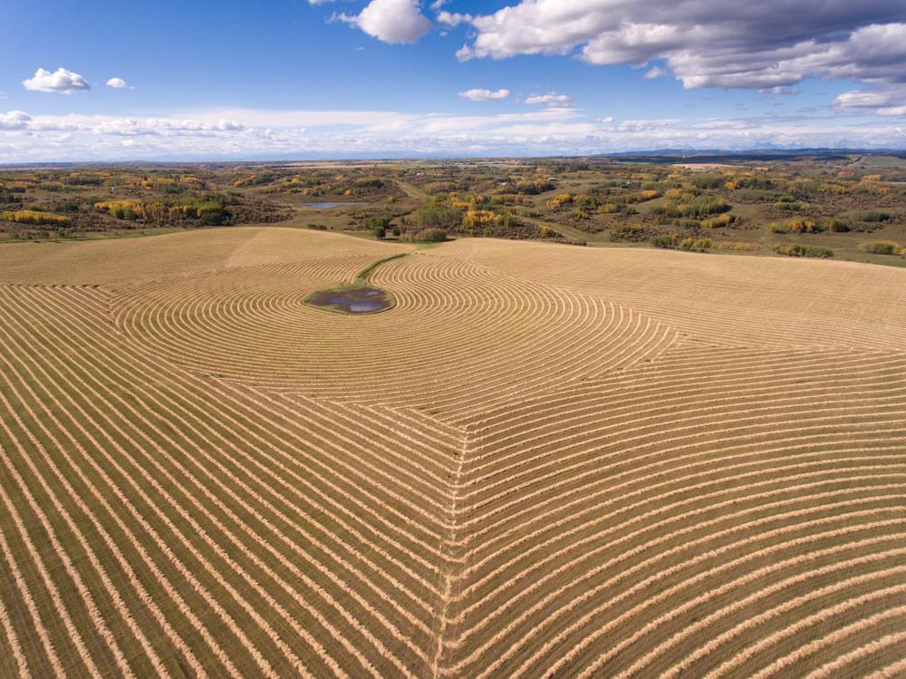 Cut hay by Dogpound