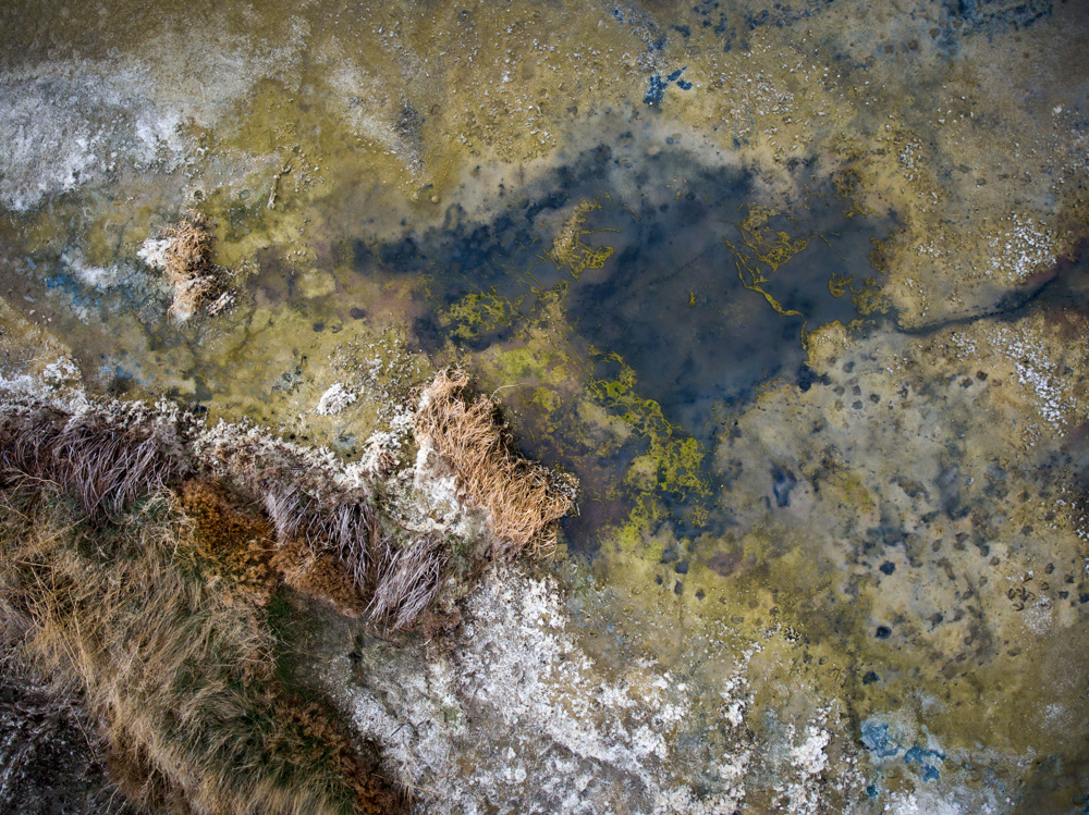 Cyanobacteria and alkali in a dry slough