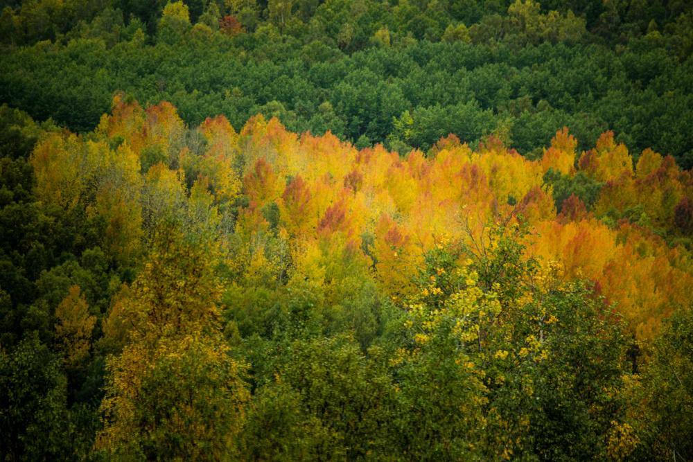 Fall colour, Buryatia, Siberia