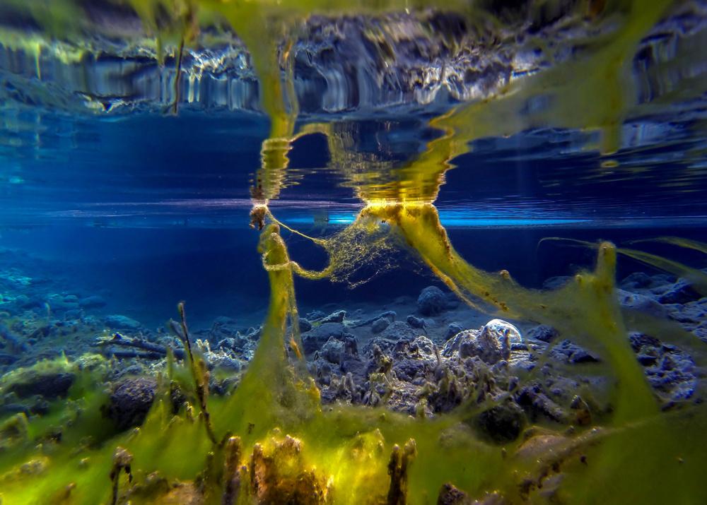 The Algae Nebula