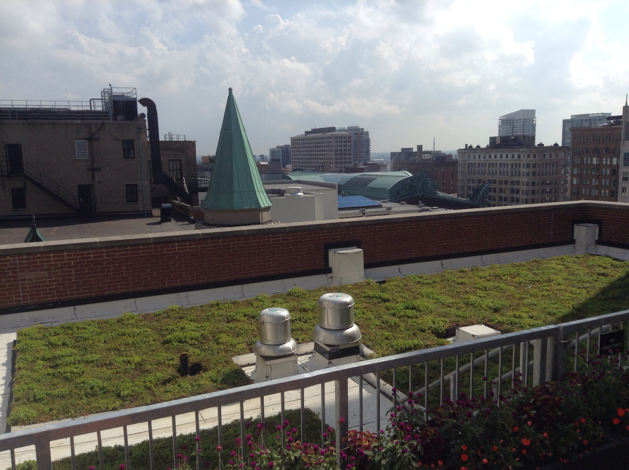 Green roof next to the grilling area, facing south