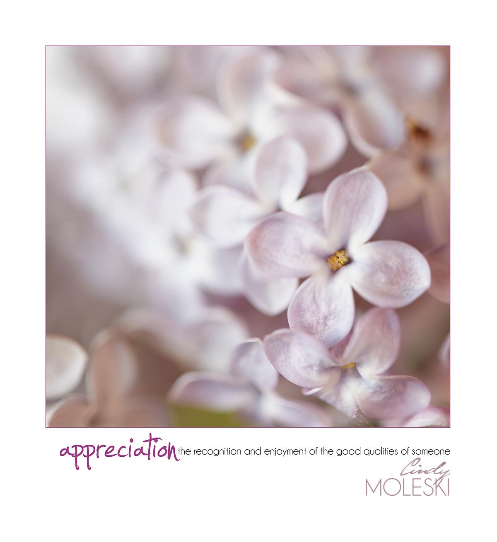 cindy-moleski-professional-photographer-flowers-floral-lilacs-artistic-saskatoon-saskatchewan.jpg