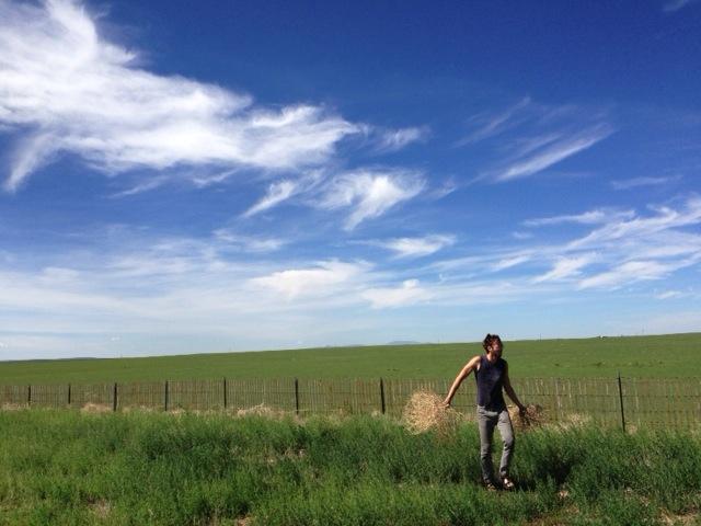 big skies and tumbleweed collecting