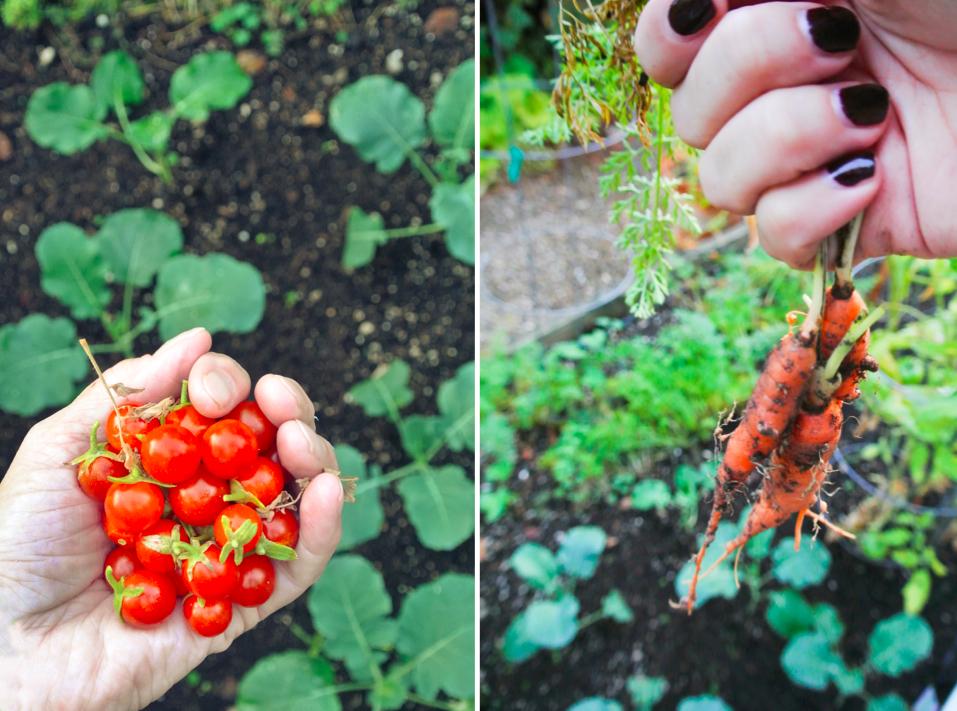 Hello_autumn_pair2.jpg