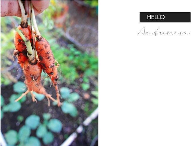 Hello_autumn .jpg