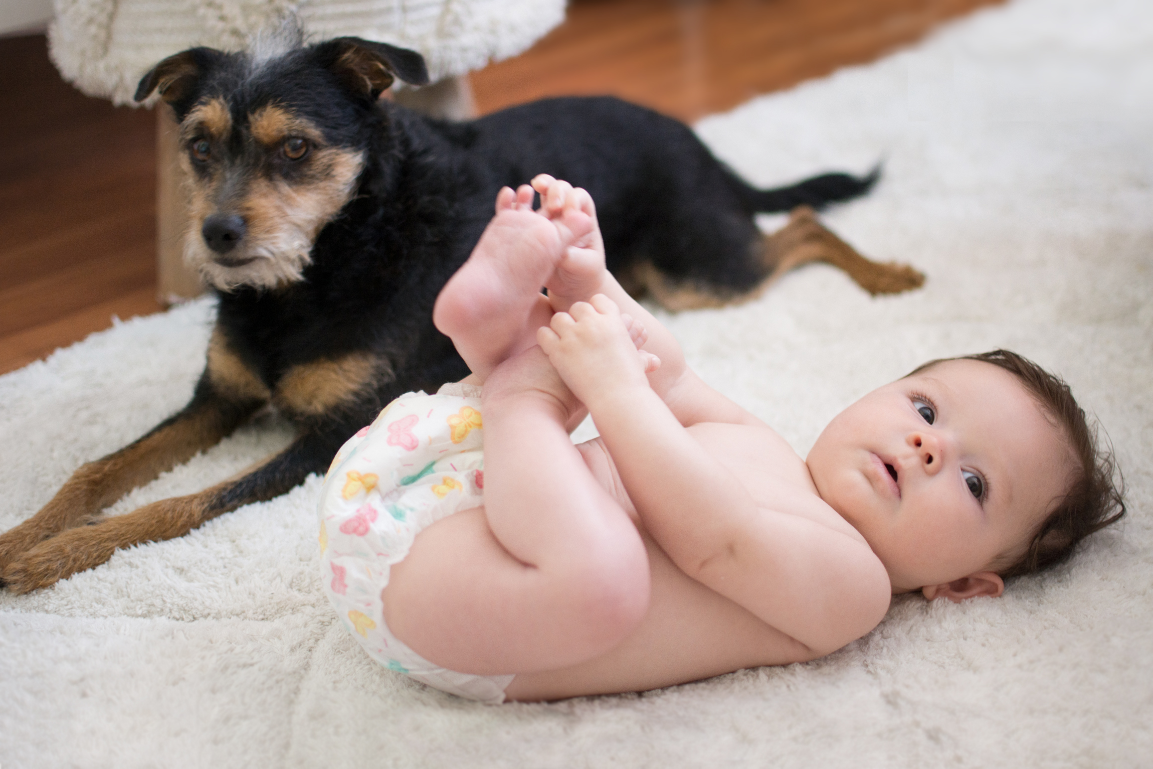 How to Introduce Your Family Pet to a New Baby via. The Pacific Standard | www.thepacificstandard.com