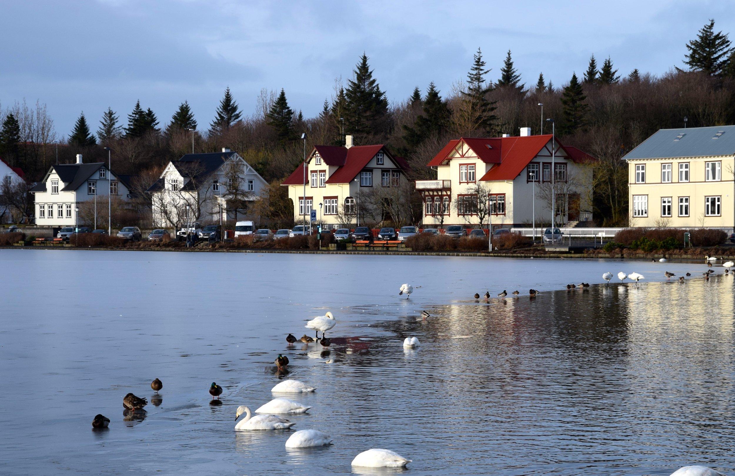 """Tjörnin """"the lake"""""""