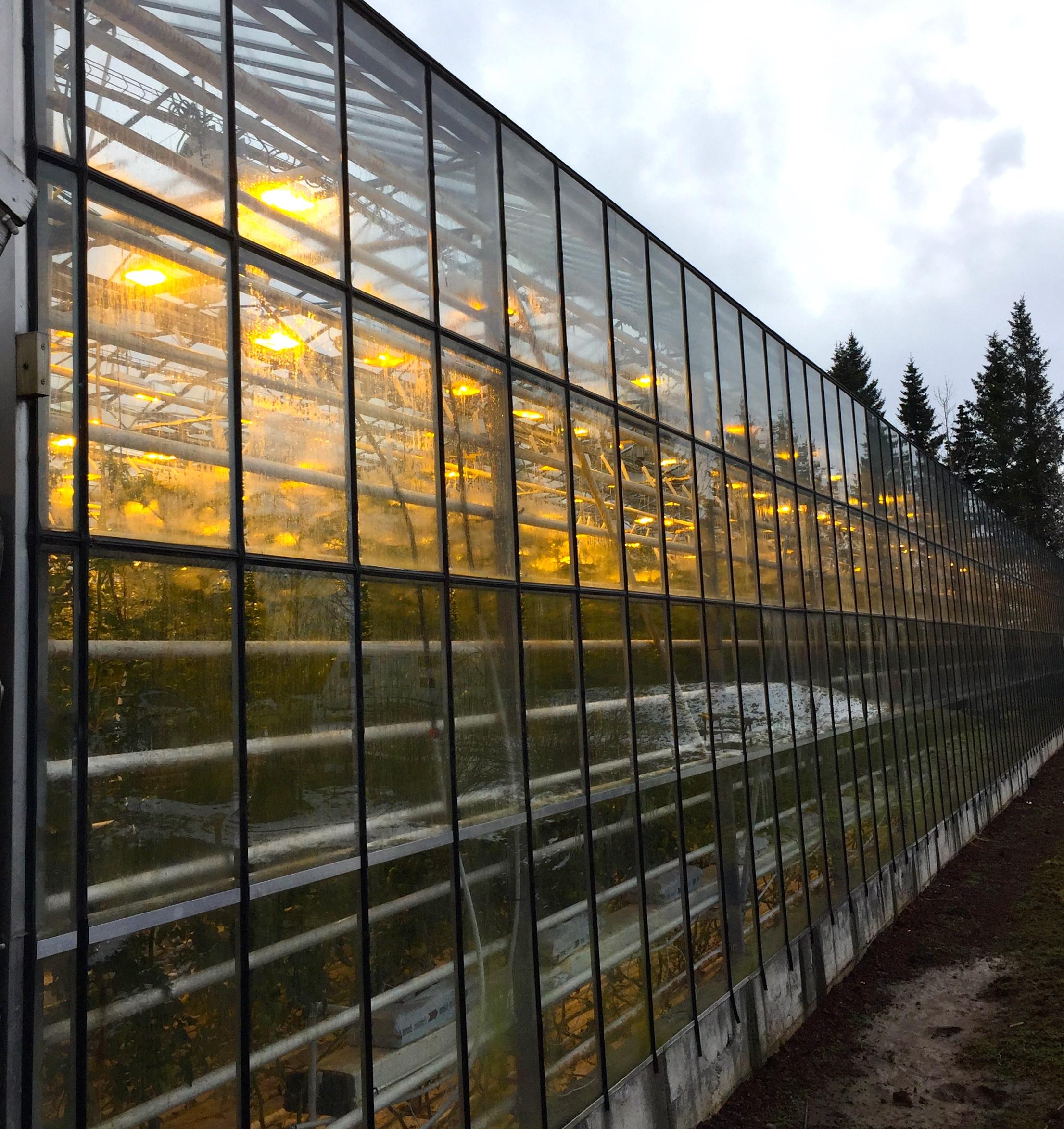 Friðheimar Farm
