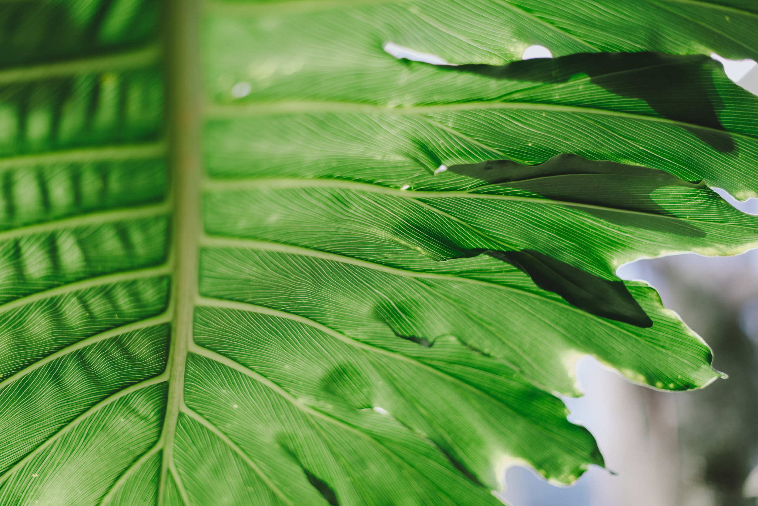 Tacoma Botanical Conservatory 04.jpg