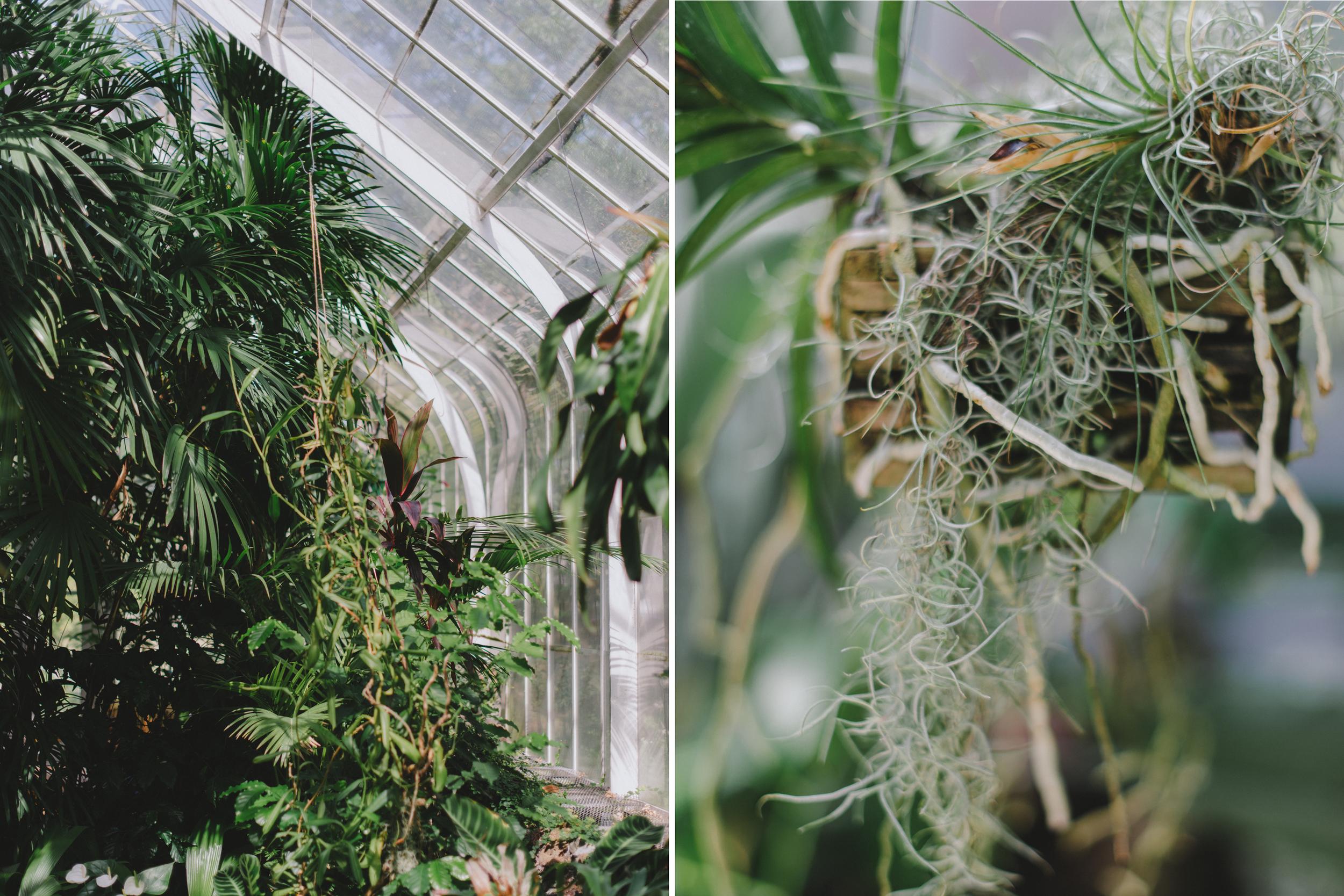 Tacoma Botanical Conservatory 08.jpg