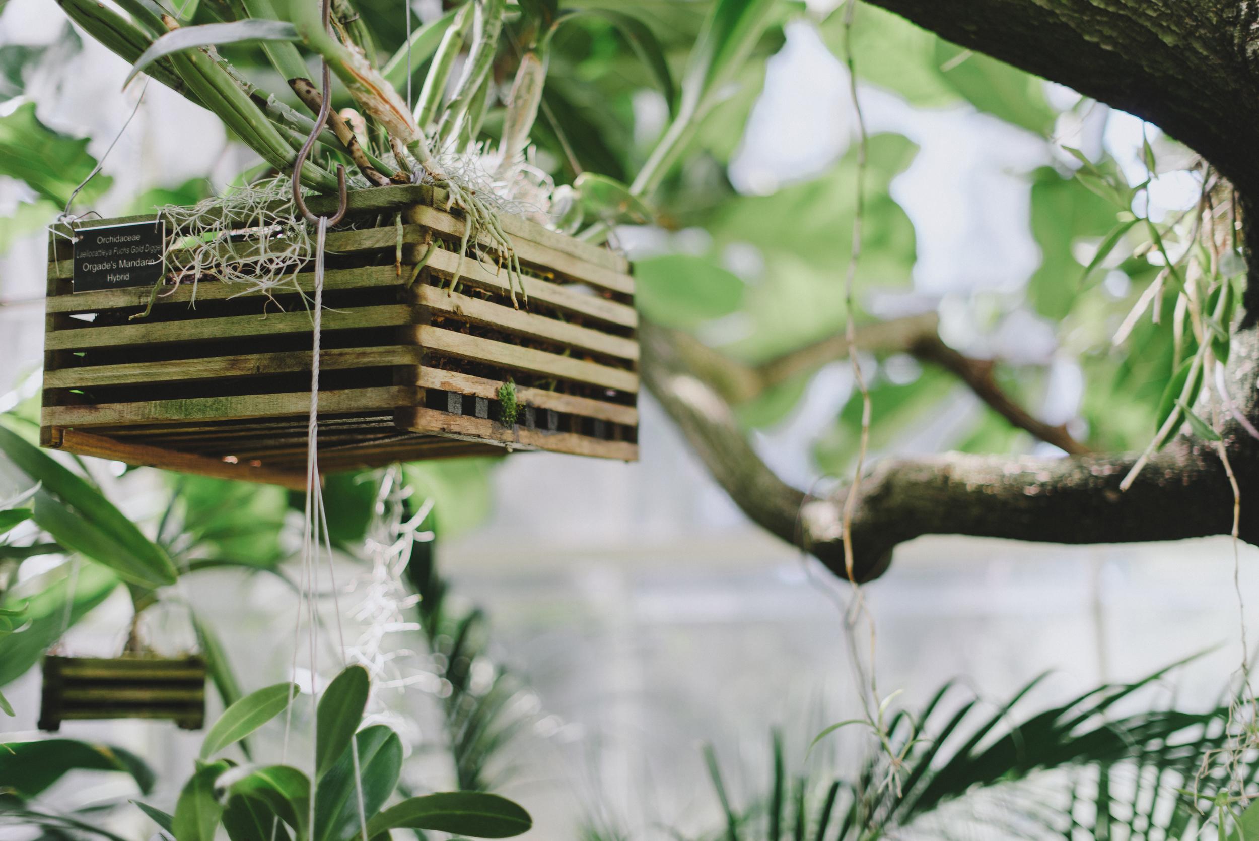 Tacoma Botanical Conservatory 11.jpg