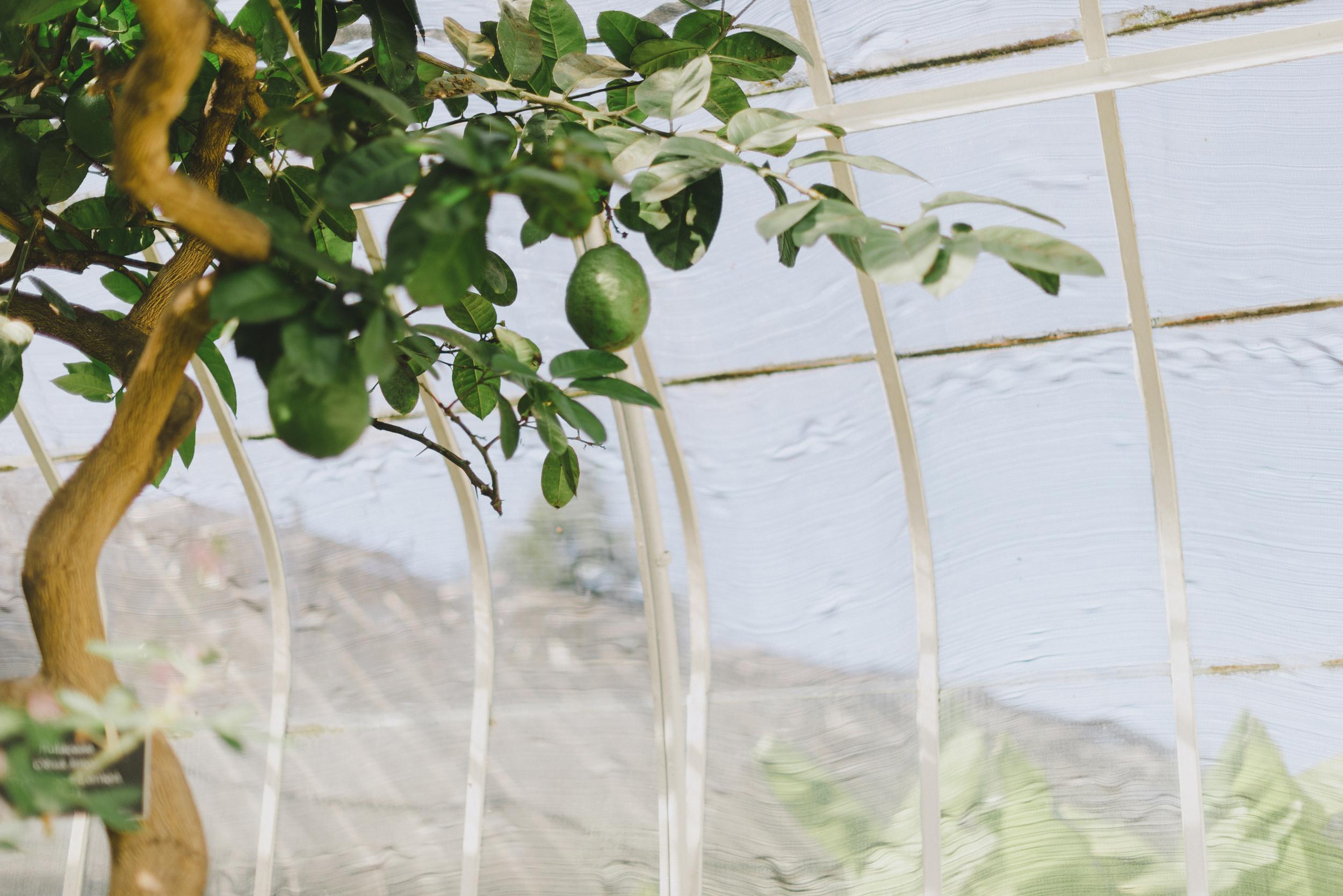 Tacoma Botanical Conservatory 15.jpg