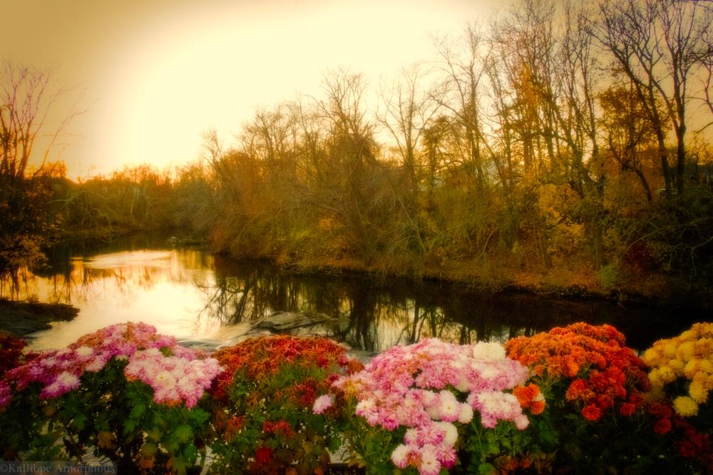 Blooming Reservoir