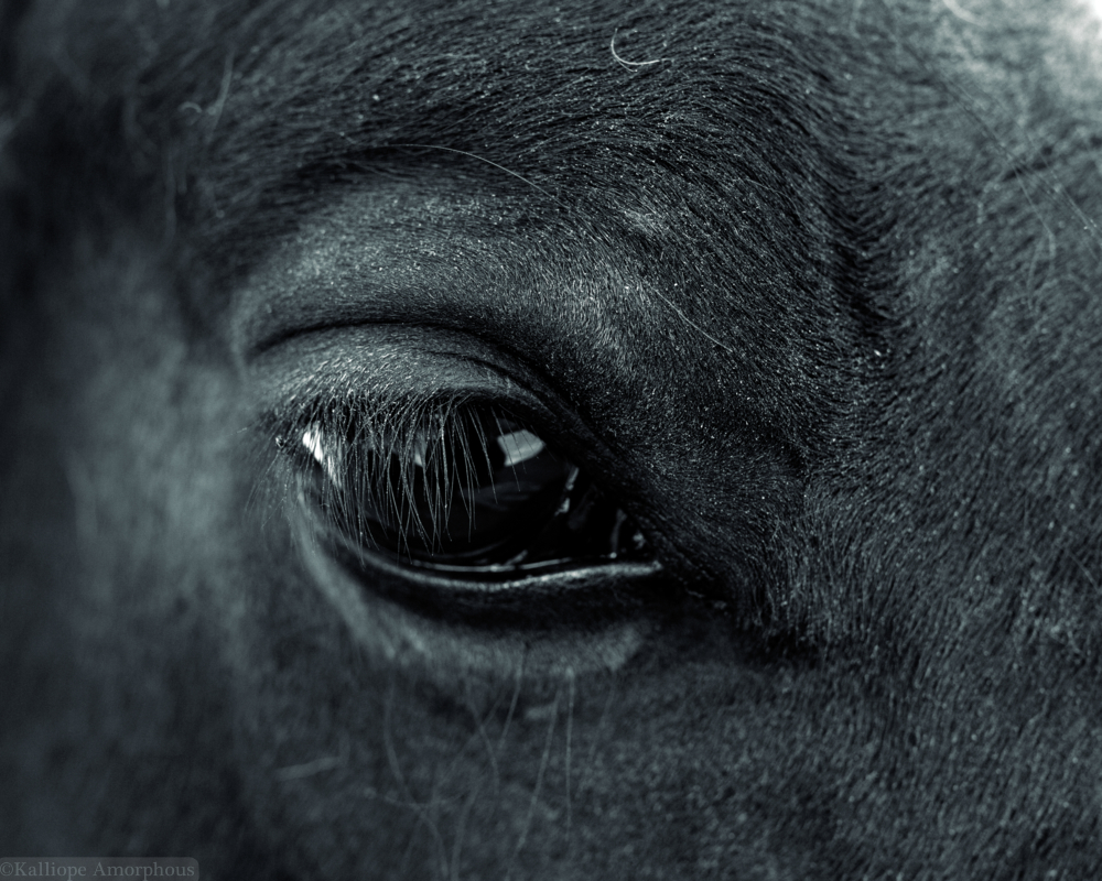 Equine Limited Editions