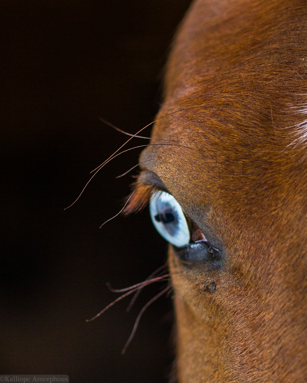 Equine Open Editions